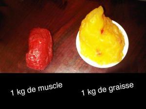 Graisse-Muscle